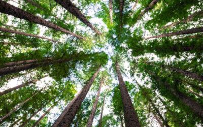 """""""Die Lebensgrundlage erhalten"""" – Eine Erklärung zur 23. UN-Klimakonferenz"""