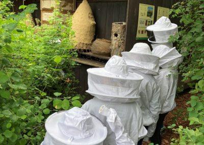 Im Bienenstand