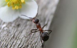 Osnabrück: Workshop - Die wundersame Welt der Ameisen @ Umweltbildungszentrum Noller Schlucht
