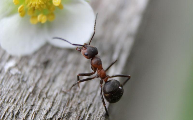 Osnabrück: Workshop – Die wundersame Welt der Ameisen