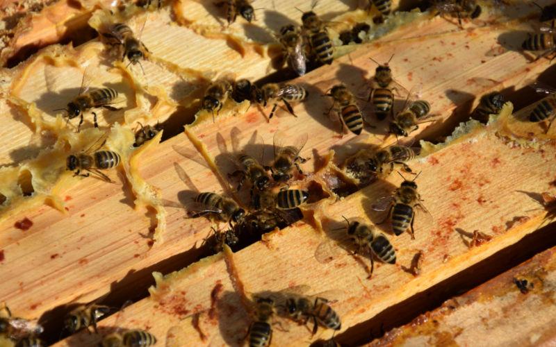 """Pressemitteilung: """"Noah und die Bienen""""-  Religionen für die Artenvielfalt"""