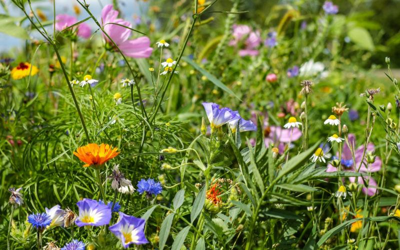 Osnabrück: Vortrag und Diskussion – Lebensraum Schöpfung biologische Vielfalt schützen und fördern