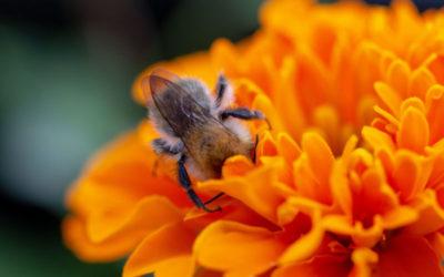 Bees for Peace – ein beeindruckendes Projekt erhält die Auszeichnung der UN-Dekade für biologische Vielfalt