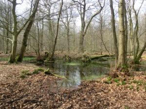 Köln: Interreligiöses Gebet für die Schöpfung @ Am Hambacher Wald