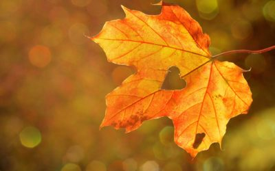 Pressemitteilung: Vom ersten Samenkorn zum bunten Herbstlaub – Biologische Vielfalt gemeinsam feiern