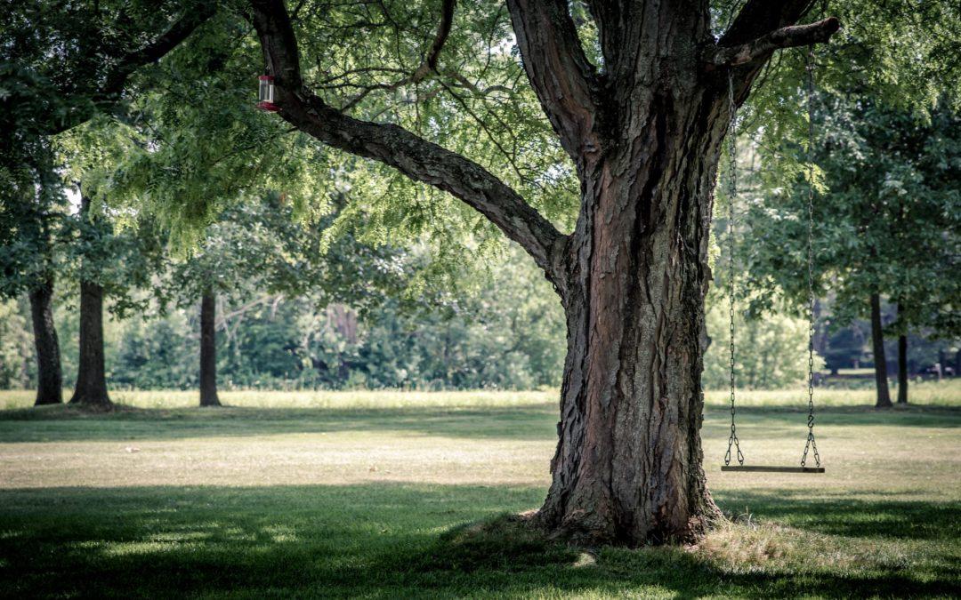 Pressemitteilung: Fest der Bäume