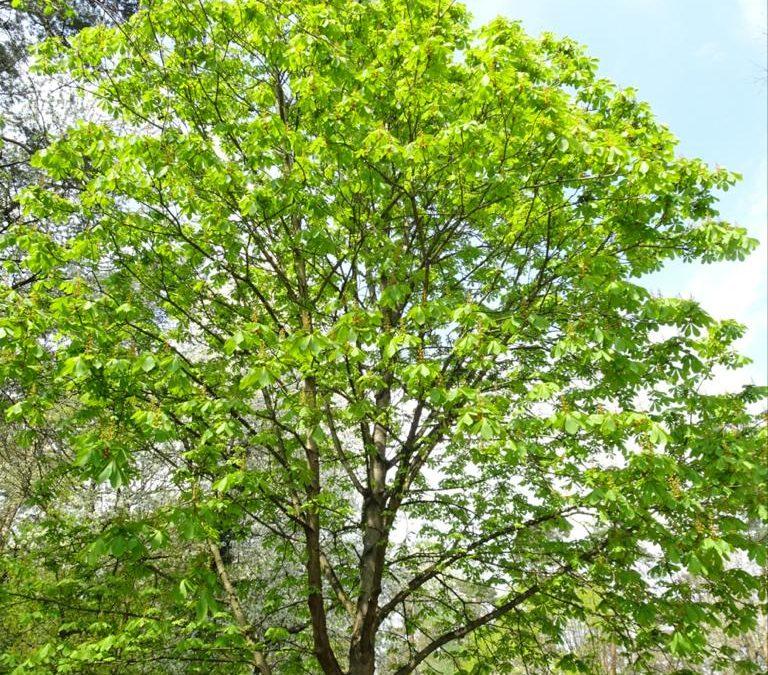 Fest der Bäume