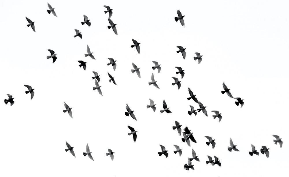 Internationaler Tag der Artenvielfalt und das Arche-Noah Fest